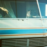 Cat In RV