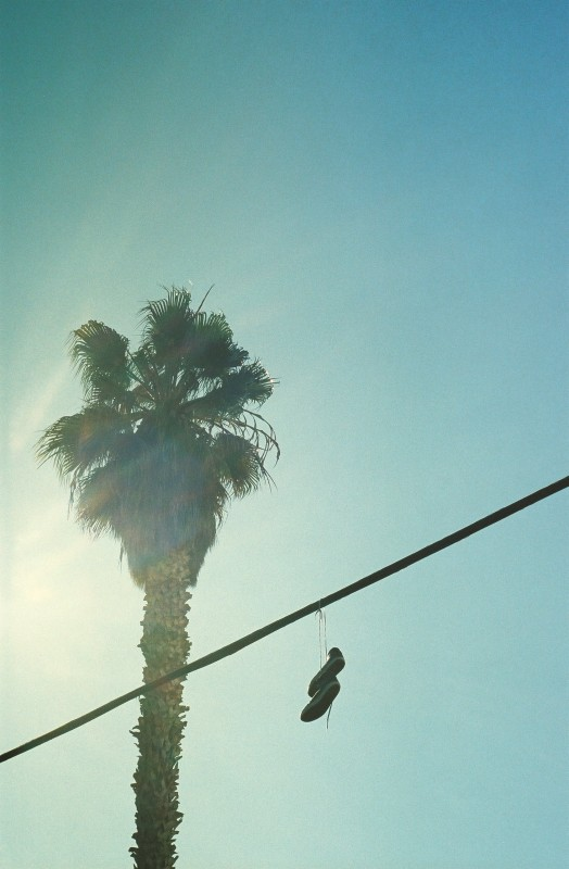 Palm Treets n Shoes