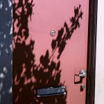 Red Door Shadow Tree