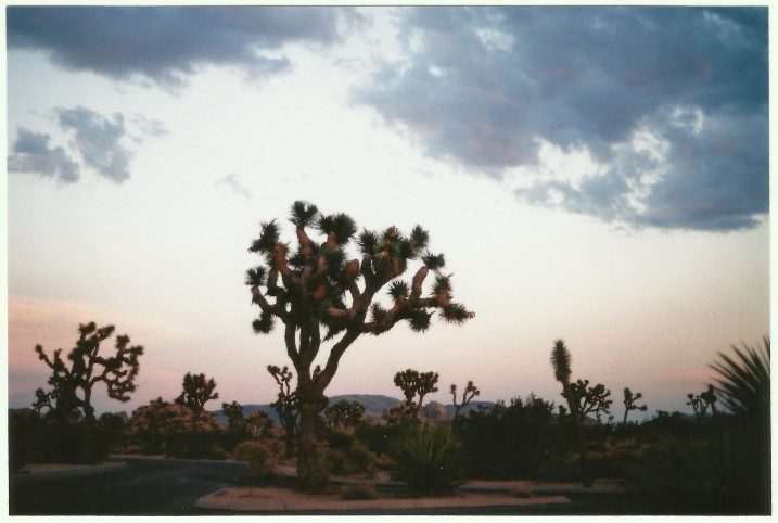 Joshua Tree7.jpeg