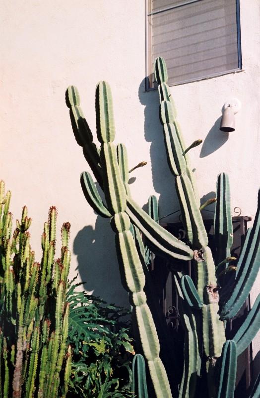 Cactus Stuff