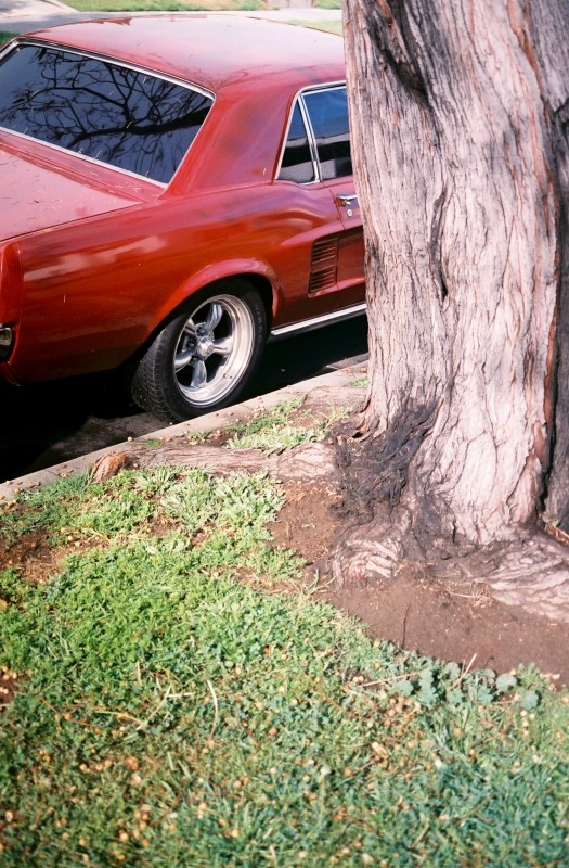 Red Car with Tree