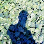 Shadow Boy Leaves
