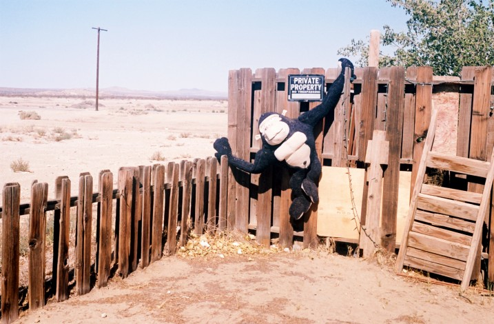 Gorilla On Fence