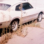 White Car and Weeds