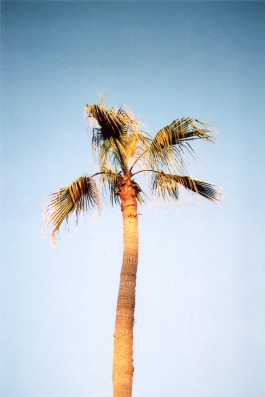 Mission Beach (5)