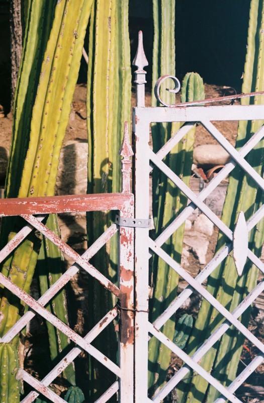Cactus n Fence